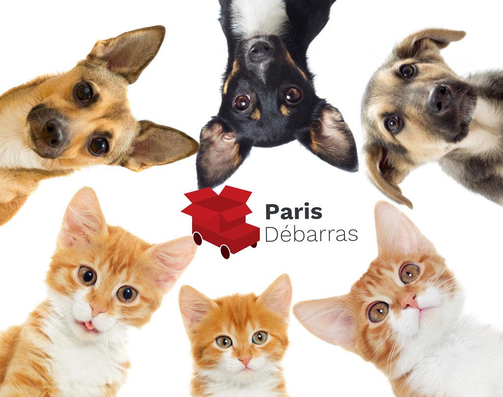 syndrome de noé - Paris Débarras